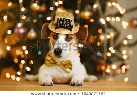 new year pet celebration stock photo © lightsource