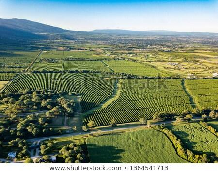 Stock fotó: Citrus · mező · hegy · kilátás · út · nap