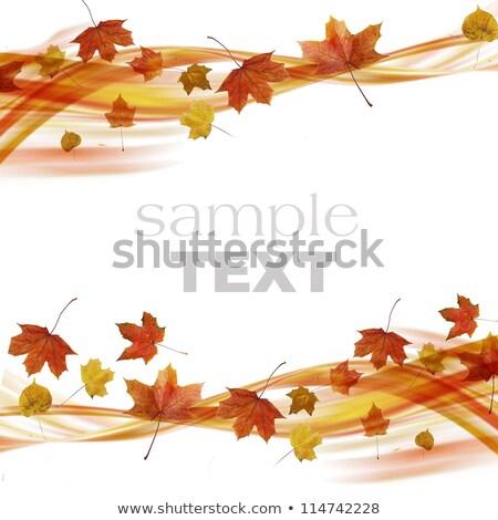 coloré · vagues · isolé · résumé · brun · orange - photo stock © cosveta