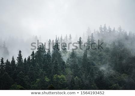 Nebuloso montanha paisagem montanhas dente nuvens Foto stock © Kayco