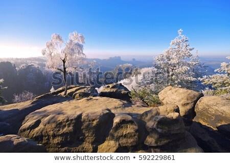 elbe sandstone mountains in winter carolarock stock photo © lianem
