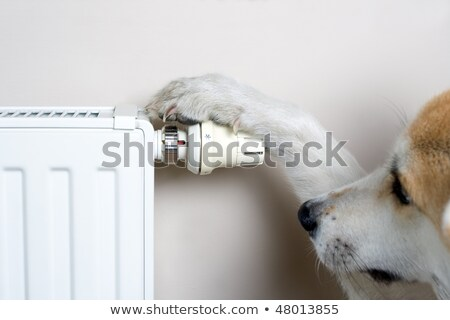 Dog adjusting comfort temperature on radiator Stock photo © blasbike