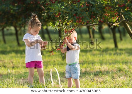 girl and boy picking cherries on tree Stock photo © IS2