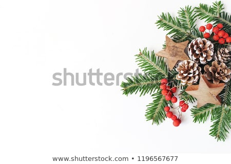 green christmas fir pine tree with cones stock photo © orensila