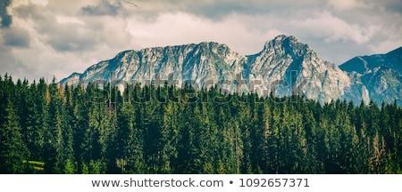 Stok fotoğraf: Dağlar · manzara · bulutlu · gün · yaz
