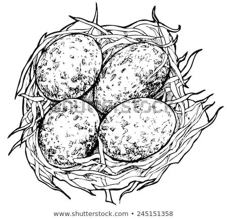 pássaro · natureza · sessão · animais · selvagens · pequeno - foto stock © shutter5