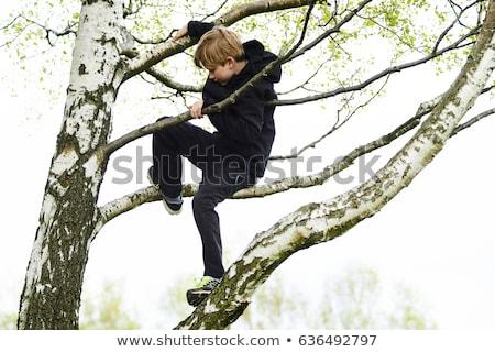 Sorridere ragazzo climbing albero faccia divertimento Foto d'archivio © IS2