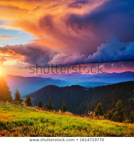martwych · skunks · saskatchewan · kolor · cyfrowe - zdjęcia stock © wildman