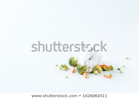 close-up view of fresh vegetables and cute furry rabbit on white  Stock photo © LightFieldStudios