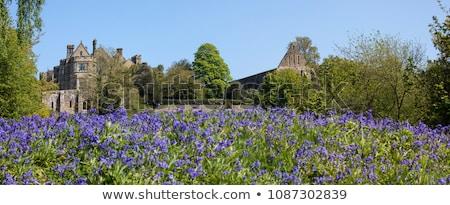 csata · apátság · iskola · Sussex · vendég · ház - stock fotó © smartin69