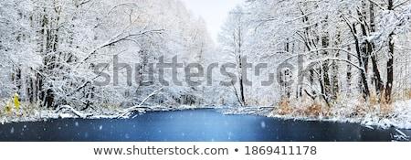 Natale view nevicate foresta bianco Foto d'archivio © Kotenko