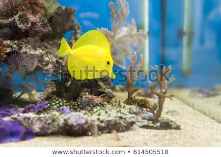 Vue belle sel eau aquarium poissons Photo stock © boggy