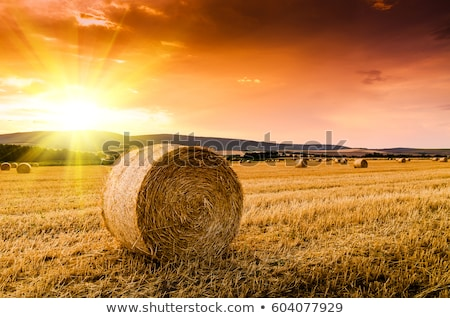 Golden hay bales in countryside at sunset Stock photo © MikhailMishchenko