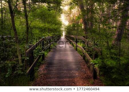 木製 橋 緑 苔 実例 木材 ストックフォト © colematt