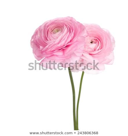 Stock fotó: Rózsaszín · fehér · virágok · kék · bokeh · rózsa