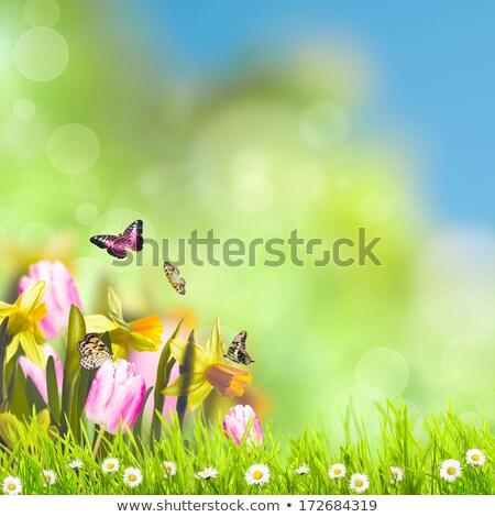 kunst · tulp · lentebloemen · zonlicht · Pasen · voorjaar - stockfoto © neirfy
