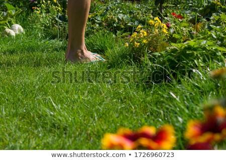 kertészkedés · nő · tart · virágcserép · ásó · fehér - stock fotó © dolgachov