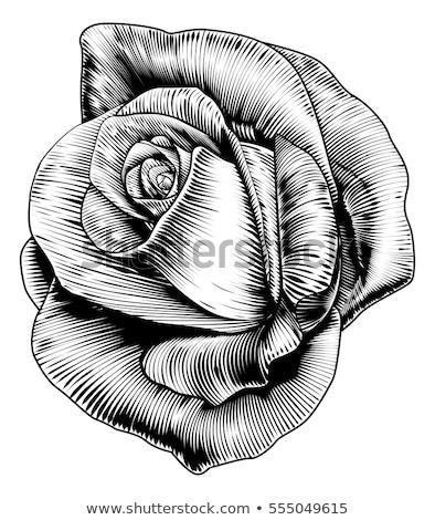Rose Flower Woodcut Etching Style Stock photo © Krisdog