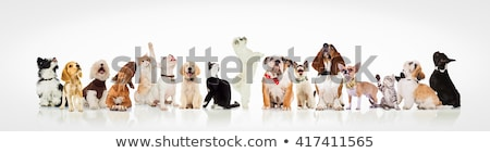 adorable dogs and cats with bowties and collars look up stock photo © feedough