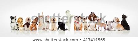 Godny podziwu psów kotów sprawdzać wiele stałego Zdjęcia stock © feedough