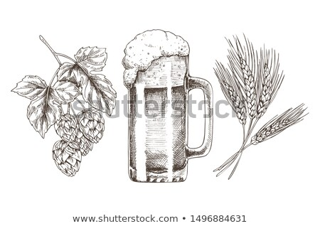 hop wheat and frothy beer in glossy glass goblet stock photo © robuart