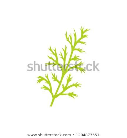 Especies hierba primer plano icono ramita rama Foto stock © robuart