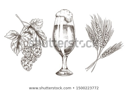 hop and wheat stack and foamy alcohol beer glass stock photo © robuart