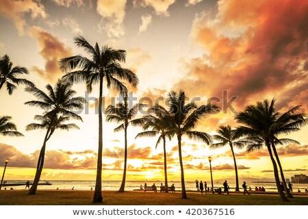 Hajnal Waikiki tengerpart Hawaii fények felfelé Stock fotó © jsnover