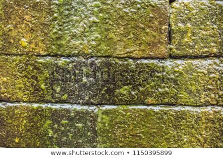 wet brick wall with moss balinese style stock photo © galitskaya