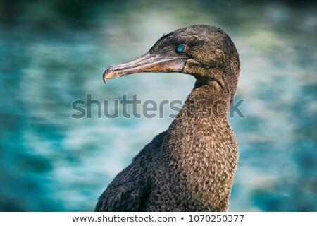 животные живая природа птица морем острове точки Сток-фото © Maridav