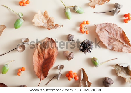 hat and fallen autumn leaves on white background Stock photo © dolgachov