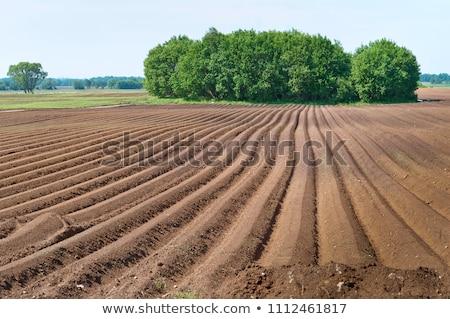 Frissen mező tavasz fekete mezőgazdaság föld Stock fotó © meinzahn