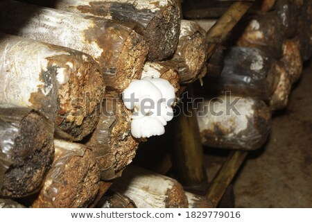 Agrícola hermosa setas comer blanco Foto stock © romvo
