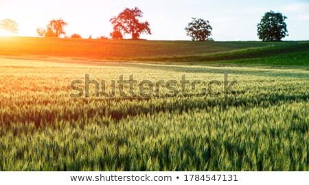 Rcih Farmlands Stock photo © rghenry
