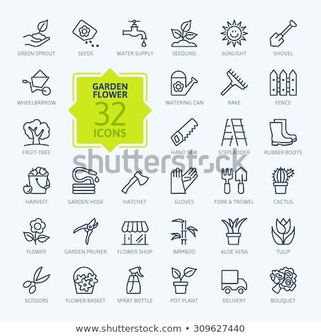 apple harvest line icon stock photo © rastudio