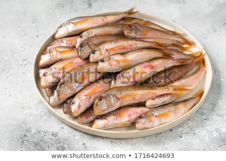 Red mullet fishes Stock photo © boggy