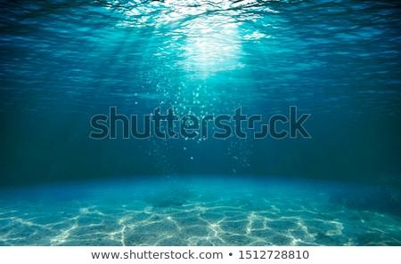 Subaquatique illustration vue arbre mer bleu Photo stock © colematt
