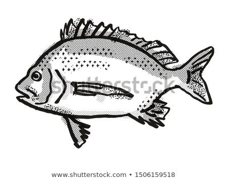 Pikey Bream Australian Fish Cartoon Retro Drawing Stock photo © patrimonio