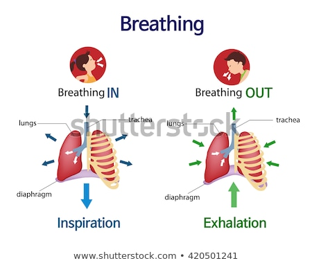 exercises to breathe with the diaphragm Stock photo © adrenalina