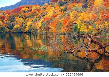 lake  Towada  Stock photo © yoshiyayo