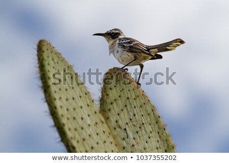 Tengerpart szigetek kicsi gúny madár homok Stock fotó © backyardproductions