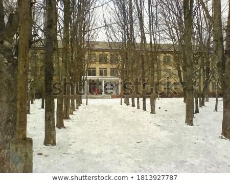 Jardín invierno 17 árbol hierba nieve Foto stock © LianeM