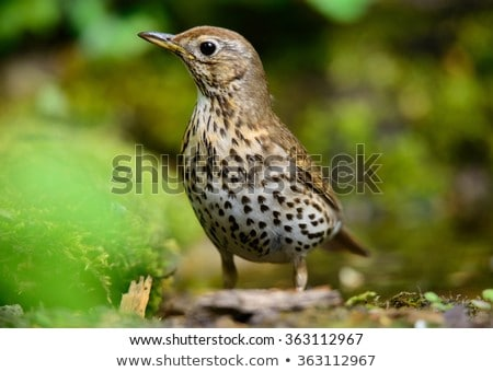 Pássaro madeira foto jardim Foto stock © Dermot68