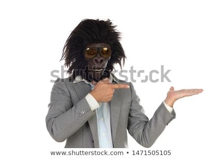 Biznesmen goryl głowie odizolowany biały Zdjęcia stock © Gelpi