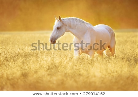 白馬 草原 農民 ツリー 自然 ストックフォト © rhamm