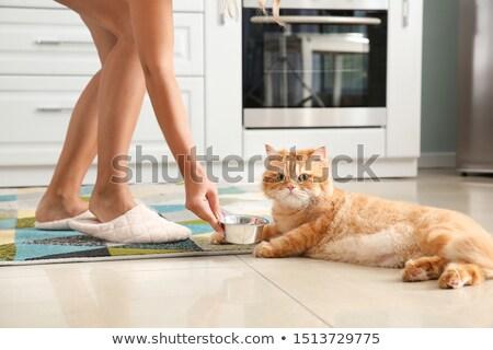 nő · etetés · macskák - stock fotó © MichalEyal