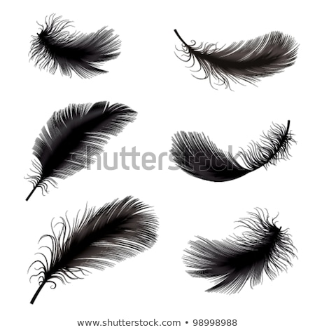 three contour feathers Stock photo © blackmoon979