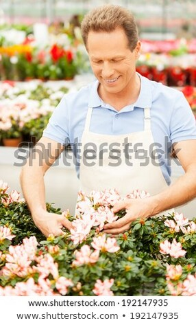 Senior Man Arranging Flowers Stock photo © IS2