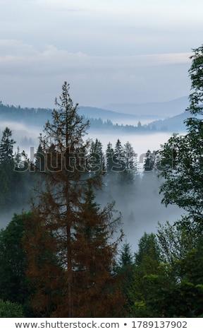 testtartás · reggel · köd · farm · magas · hegyek - stock fotó © wildman