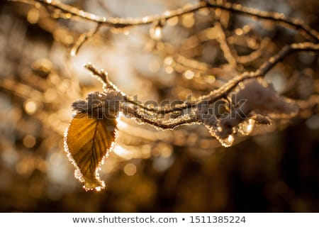 морозный · природного · шаблон · солнце · зима · стекла - Сток-фото © ptichka